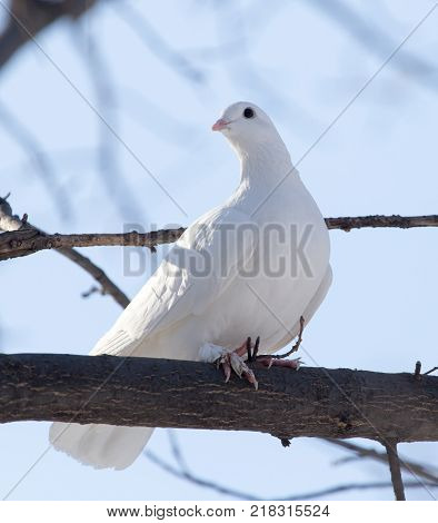 white dove on the tree in nature .