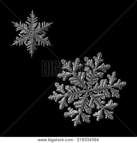 Two snowflakes isolated on black background. Macro photo of real snow crystals: large stellar dendrites with complex, elegant shapes, hexagonal symmetry, glossy relief surface and long, ornate arms. poster