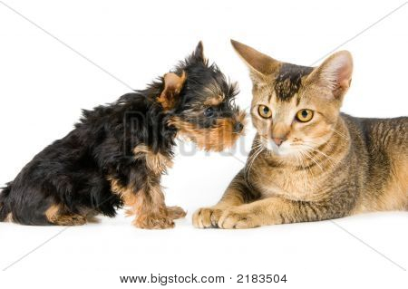 The Puppy And Kitten