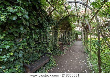 Lush rose pergola at the Vojan Gardens (Vojanovy sady). It is a public garden at the Lesser Town (Mala Strana) in Prague, Czech Republic.
