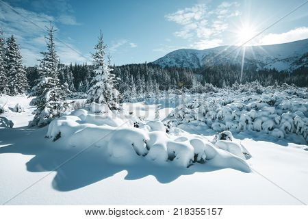 Scenic image of fairy-tale woodland in sunlit. Frosty day on ski resort. Location Carpathian national park, Ukraine, Europe. Picture of the concept of adventure vacation. Discover the beauty of earth