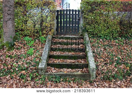 Stone steps covered with moss and brown autumn leaves leading towards wood picket yard fence doors surrounded with hedge and grass covered with fallen leaves