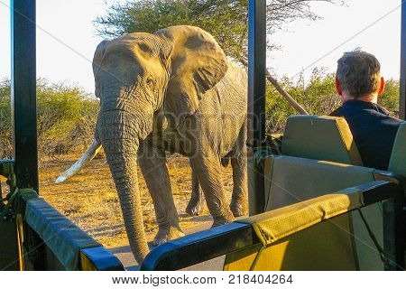 close encounter with elephant during photographic safari Kruger Park South Africa