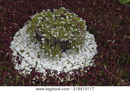 White background of cobble piece marble and flower in garden at National monument of landscape architecture Park museum Vrana in former time royal palace on the outskirts of Sofia, Bulgaria, Europe