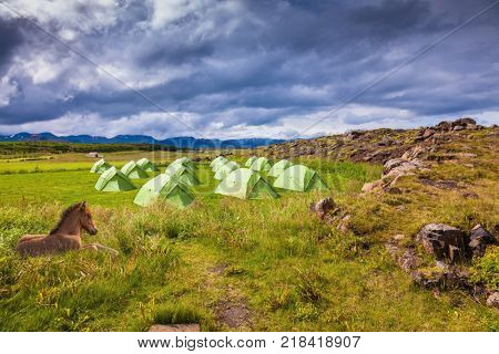 Icelandic horse have a rest near the summer campground.  Summer holidays in Iceland