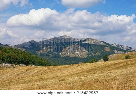 Mountain landscape with yellow pastures and green triangular patterns of the forest. Balkans. Montenegro, Krnovo near Niksic town