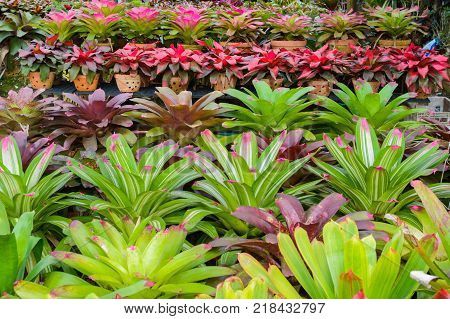 rows of young growth plant hanging pot in farm factory, plant nursery, mass production plants for flowers and decorative plant retail and export business.