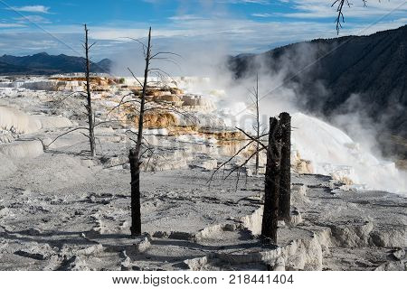 Eerie scenery at the main terrace of the Mammoth Hot Springs area Yellowstone National Park Wyoming USA