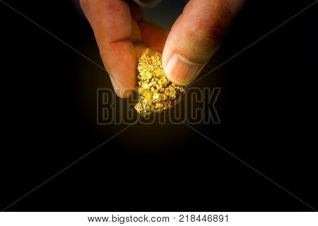The pure gold ore found in the mine is in the hands of men on black background