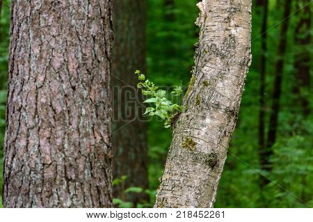 Tree Trunk Textures In Natural Environment