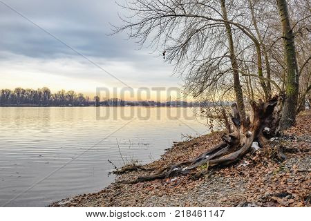 View Of Willow Trees And Poplars Close To The Dnieper River In Kiev