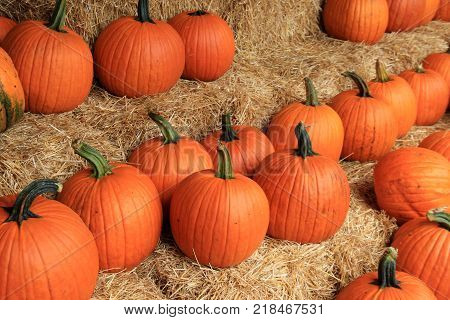 Horizontal image showing bales of hay with several bright orange  pumpkins ready for someone to buy and take home for the holiday season.