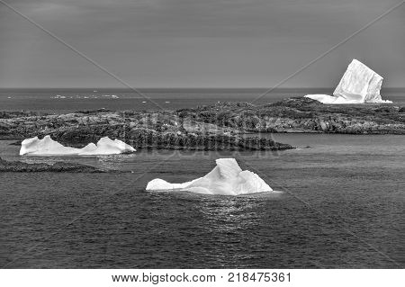 three icebergs near Fogo Island, Newfoundland; black and white
