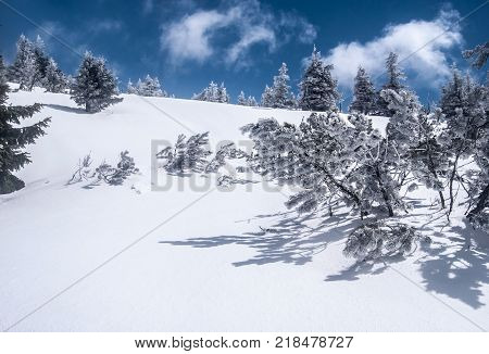 winter Jeseniky mountains near Velky Maj hill in Czech republic with snow small tress and blue sky with clouds
