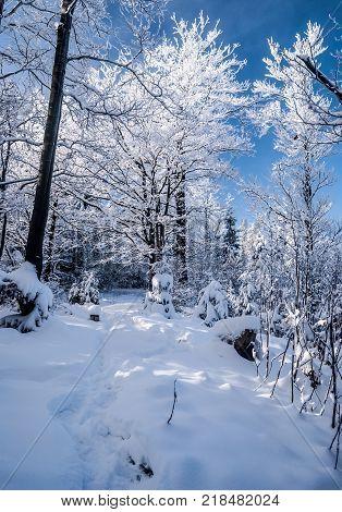 winter landscape with snow frozen trees and clear sky on Sulov hill near Bily kriz on czech - slovakian borders in Moravskoslezske Beskydy mountains