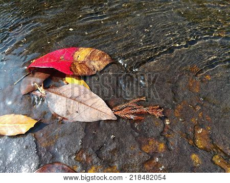 Close up picture of Autumn leaves in the nature waterway.