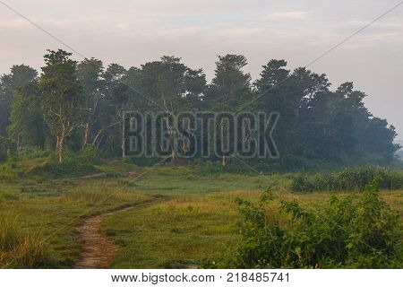 Beautiful view inside of the forest in the Royal Chitwan National Park Nepal. The park is 932 sq. km is mainly covered by jungle.