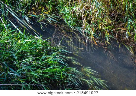 The shallow stream and coastal plants spread in the direction of water movement