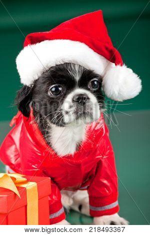 Santa Clous - dog