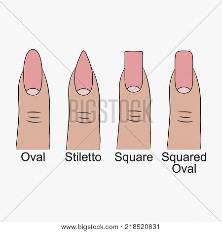 Different nail shapes. Fingernails forms for manicure. Vector illustration. poster