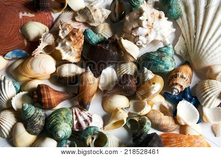 Closeup of colorful starfish, shellfish, seashell, scallops as summer travel background, top view, close-up