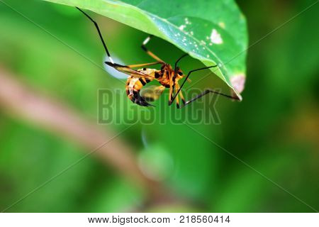 The Beautiful wasps and sting under the green leaves.