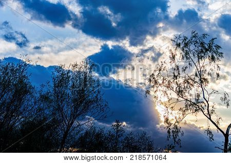 trees silhouetted against the evening sky, sunlight streaming through dramatic clouds, sunset and sunrise
