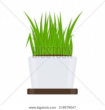 Vector illustration of fresh green grass in a pot with tray isolated on white background. Potted plant in container for house decoration.
