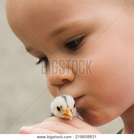 The young child is kissing the little chick bird and holding in his hands. Animal care concept.