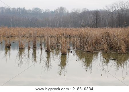 pond with sear reed on melancholic misty autumn day