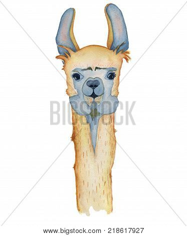 Cute Llama cartoon character watercolor illustration, Alpaca animal, hand drawn style.  Isolated white background. Good for greeting cards, invitations, decoration, etc.