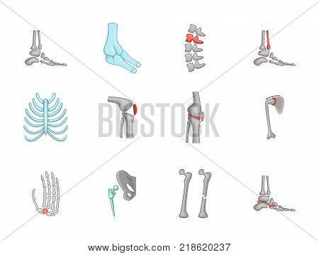 Human bones icon set. Cartoon set of human bones vector icons for web design isolated on white background