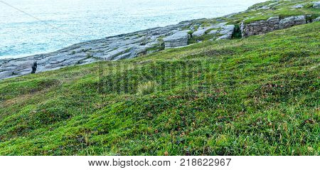 Ripe cloudberries on the island of Mageroya, Norway. Cloudberry is an edible northern helpful barry