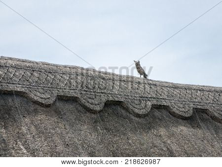 Thatched roof of an English cottage with straw owl for pest deterrent