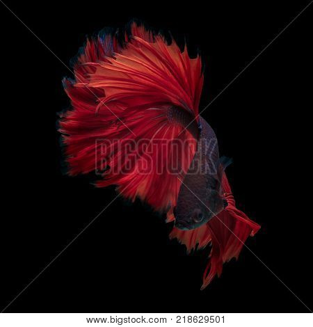 Fine art concept close up beautiful movement of