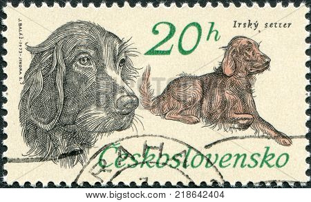 CZECHOSLOVAKIA - CIRCA 1973: A stamp printed in the Czechoslovakia shows the Hunting Dogs Irish setter circa 1973