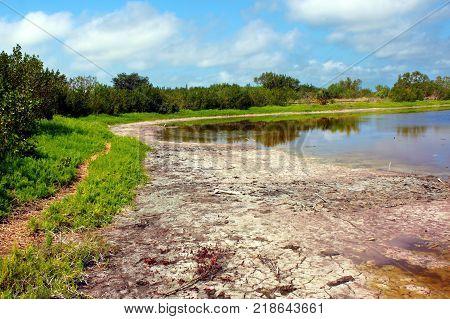 Shoreline landscape of Eco Pond in Everglades National Park Florida