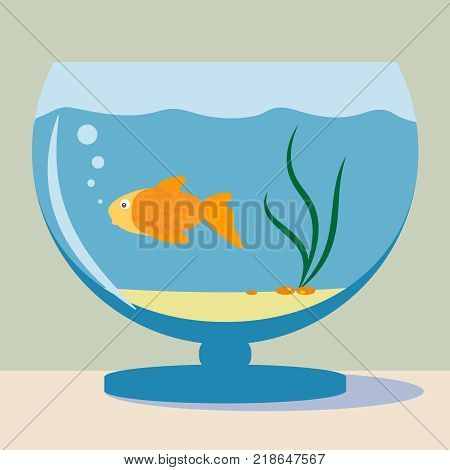 Vector aquarium with golden fish and shadow silhouette illustration. Colorful funny cartoon flat aquarium vector icon isolated on background.