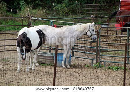two horses outside in rustic metal pen
