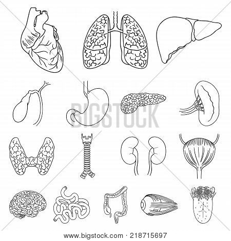 Human organs outline icons in set collection for design. Anatomy and internal organs vector symbol stock  illustration.