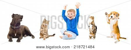 Group of a playful pets and happy boy, isolated on white background