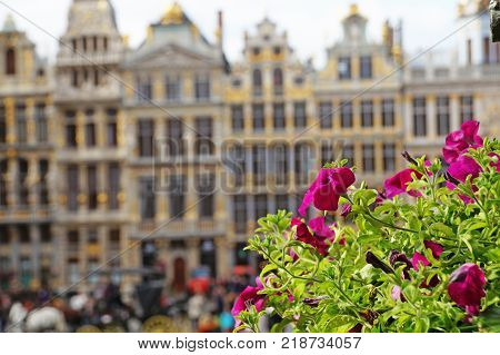 Grand Place in Brussels. Many tourists walk and look at beautiful buildings on the main square in Brussels. Flowers bloom on the Grand Place in Brussels.