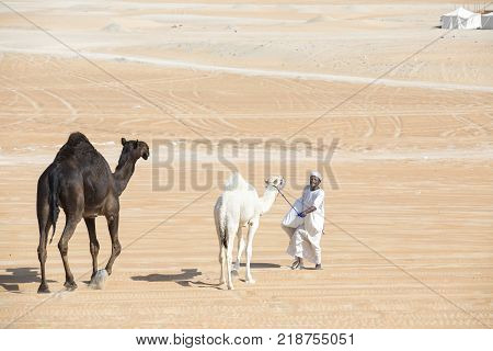 Madinat Zayed, United Arab Emirates, December 15th 2017: man with camels at the The Million Street where camels are bought and sold