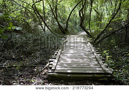 Old wooden bridge in the middle of a forest