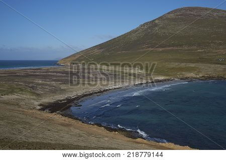 The Neck on Saunders Island in the Falkland Islands; home to multiple colonies of Gentoo Penguins Pygoscelis papua and other wildlife.