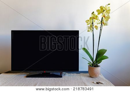 Living room with TV set and orchid