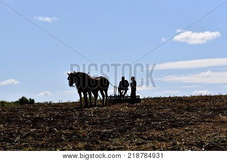 ROLLAG, MINNESOTA, Sept 3. 2017: Two farmers and a team of horse pulling a disk are silhouetted against the sky at the annual WCSTR farm show in Rollag held each Labor Day weekend where 1000's attend.