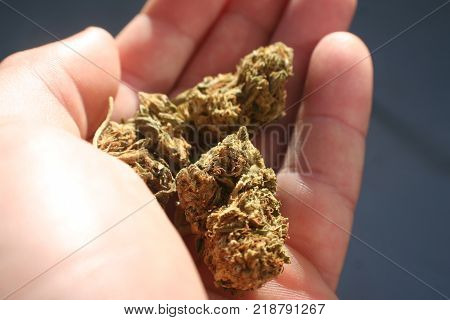 Marijuana In Palm Of Hand High Quality Stock Photo