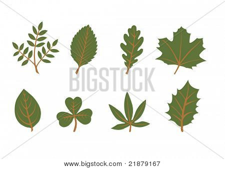 set of vector leaf shapes on white background