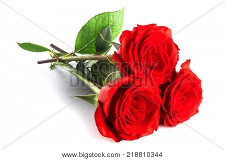 Three beautiful red roses isolated on white background